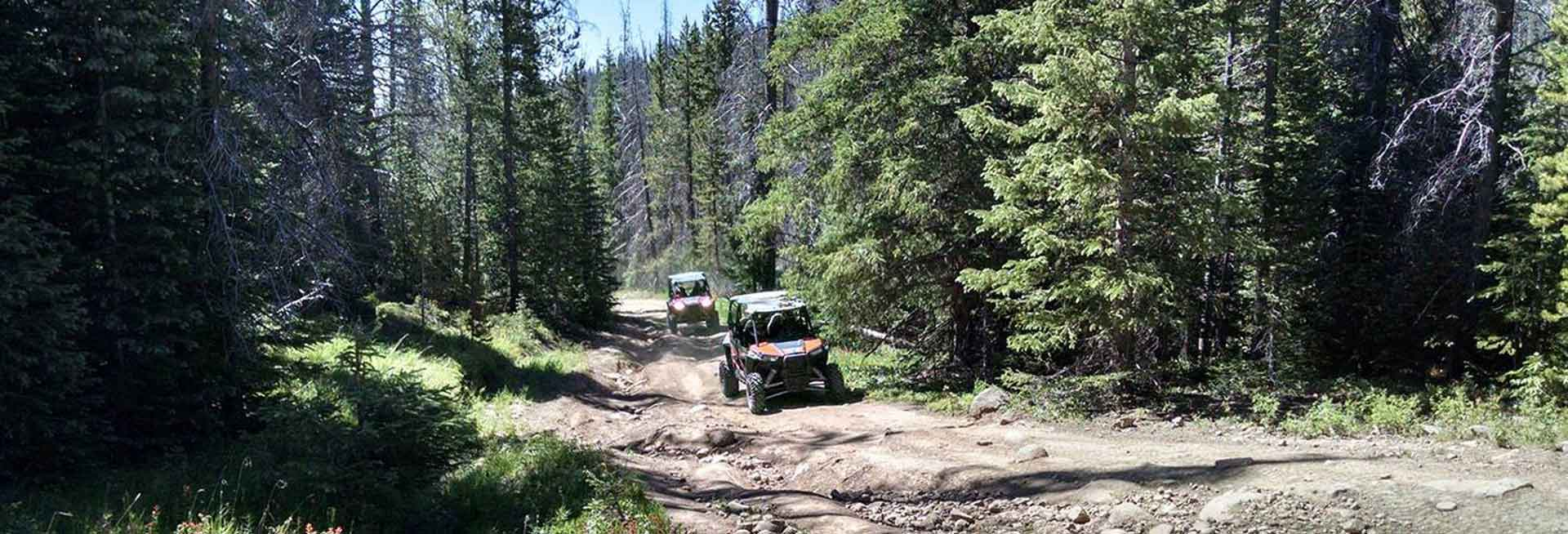 ATVs on a forest trail.