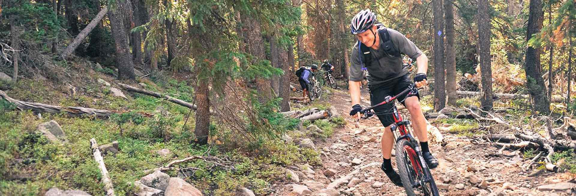 Mountain bikers on a forest trail.