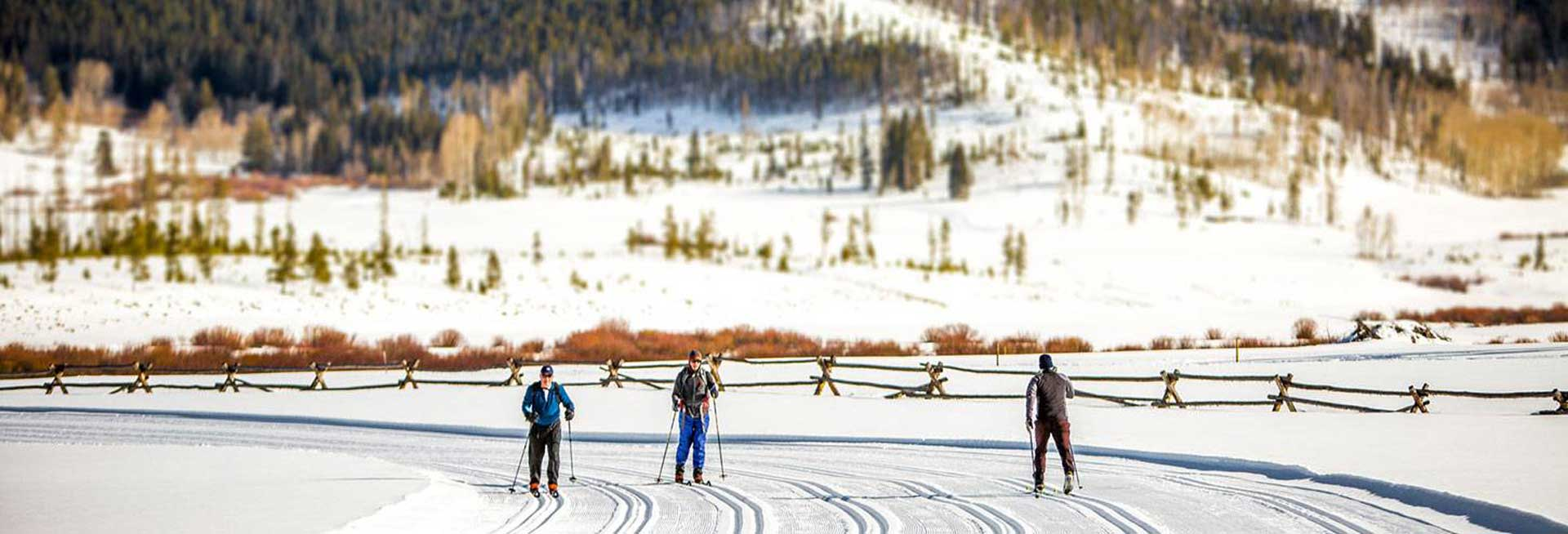 Cross country skiers on trail.