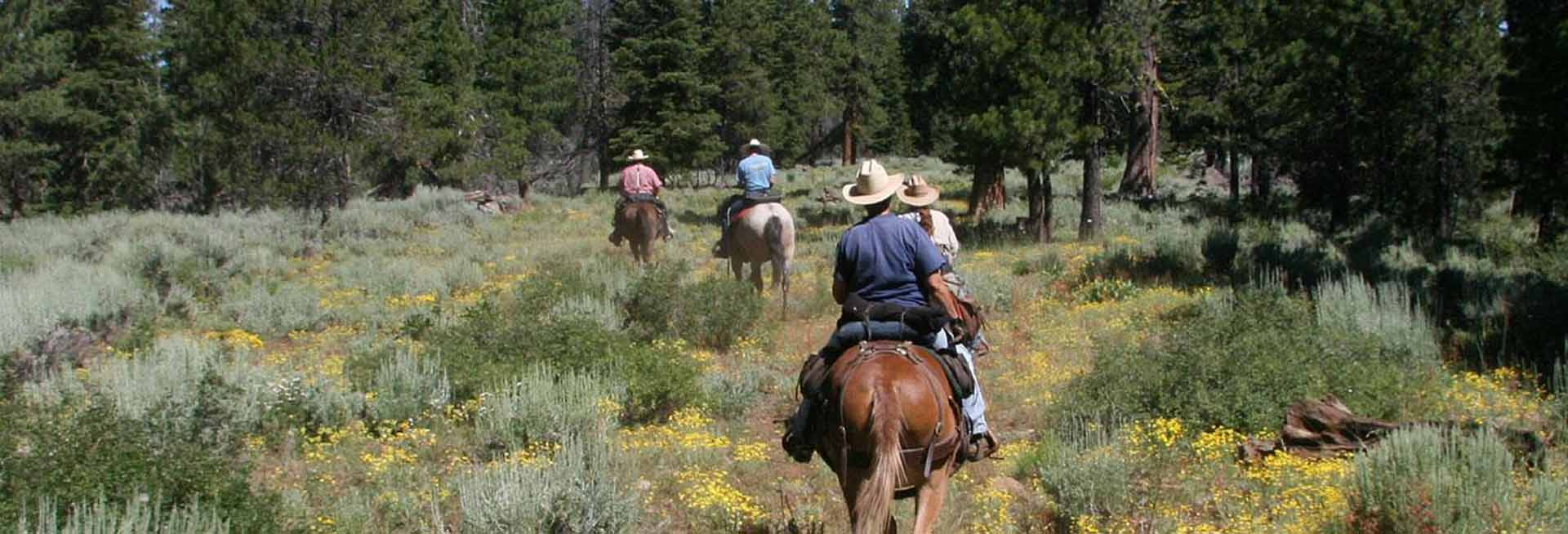 Group on horseback trail riding.